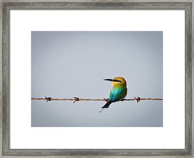 Rainbow Bee-eater Perched On Wire Framed Print by Johan Larson
