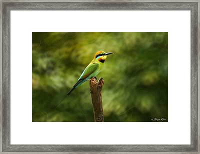 Rainbow Bee-eater Framed Print by Tanya Rossi