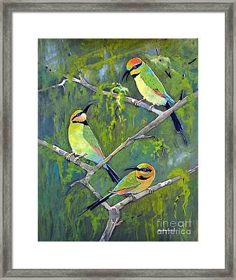 Rainbow Bee-eaters Framed Print by Audrey Russill