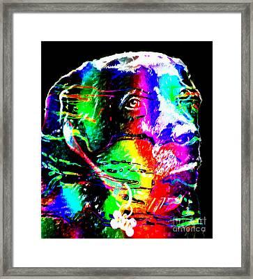 Rainbow Lab Framed Print by Barbara Griffin