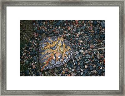 Raindrops Framed Print by Shirley Mailloux