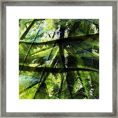 Rainforest Abstract Framed Print by Bonnie Bruno