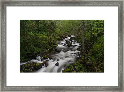 Rainier Forest Flow Framed Print by Mike Reid
