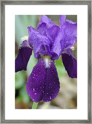 Rainy Day Beauty Framed Print by Christine Belt