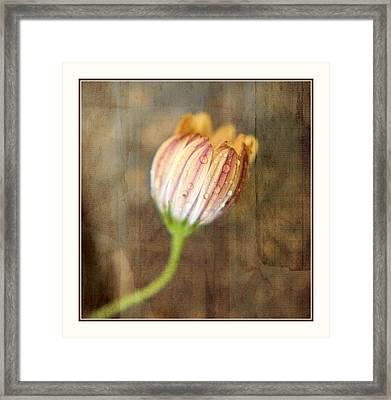 Rainy Day Daisy Framed Print by Bonnie Bruno