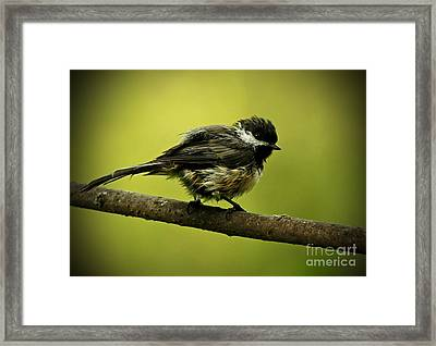 Rainy Days - Chickadee Framed Print by Inspired Nature Photography Fine Art Photography