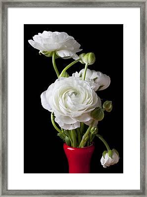 Ranunculus In Red Vase Framed Print by Garry Gay
