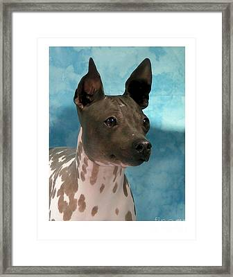 Rat Terrier 131 Framed Print by Larry Matthews
