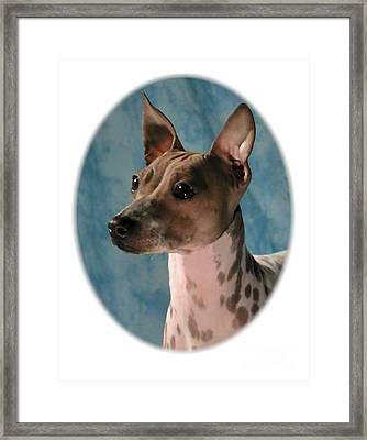 Rat Terrier 253 Framed Print by Larry Matthews