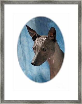 Rat Terrier 296 Framed Print by Larry Matthews