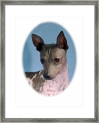 Rat Terrier 468 Framed Print by Larry Matthews