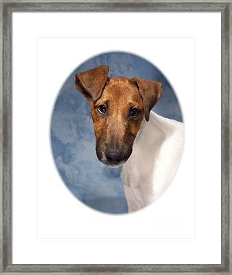 Rat Terrier 495 Framed Print by Larry Matthews