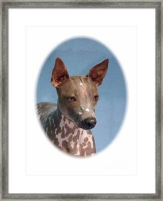 Rat Terrier 613 Framed Print by Larry Matthews