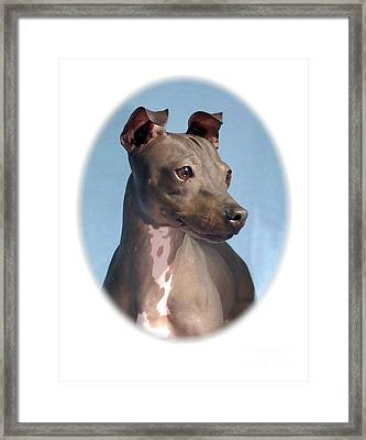 Rat Terrier 660 Framed Print by Larry Matthews