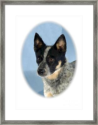 Rat Terrier 827 Framed Print by Larry Matthews