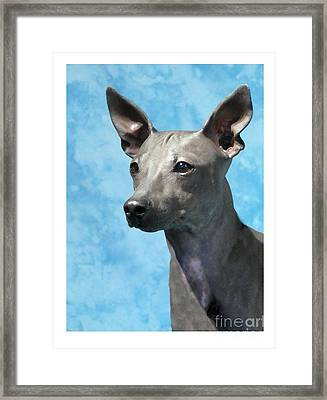 Rat Terrier 842 Framed Print by Larry Matthews