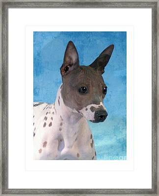 Rat Terrier 958 Framed Print by Larry Matthews