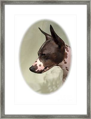 Rat Terrier 999 Framed Print by Larry Matthews