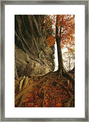 Raven Rock And Autumn Colored Beech Framed Print by Raymond Gehman
