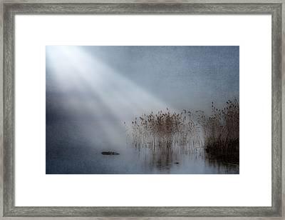Rays Of Light Framed Print by Joana Kruse