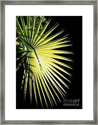 Rays Of Light Framed Print by Sabrina L Ryan