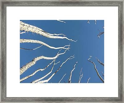 Reach High Framed Print by FeVa  Fotos