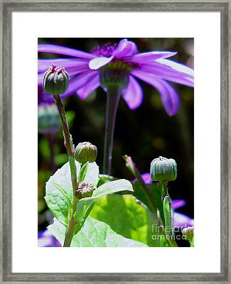 Reaching For The Future Framed Print by Rory Sagner