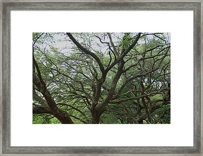 Reaching Out Framed Print by Aimee L Maher Photography and Art Visit ALMGallerydotcom
