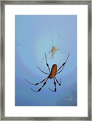 Recurring Dream Framed Print by Suzanne Gaff