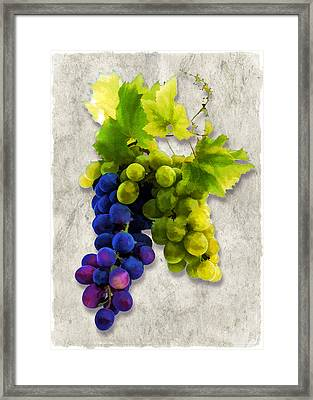 Red And White Grapes Framed Print by Elaine Plesser