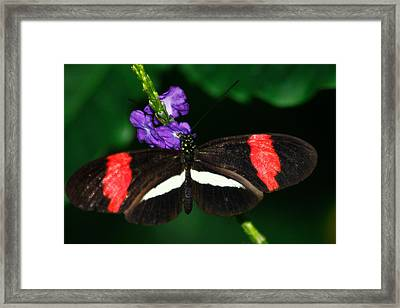 Red And White On Purple Framed Print by Scott Hovind