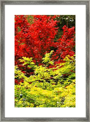 Red And Yellow Leaves Framed Print by James Eddy