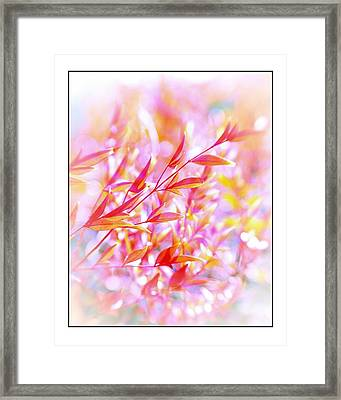 Red And Yellow Leaves Framed Print by Judi Bagwell