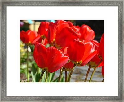 Red Art Spring Tulip Flowers Floral Framed Print by Baslee Troutman