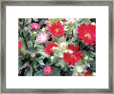 Red Asters Framed Print by Elaine Plesser