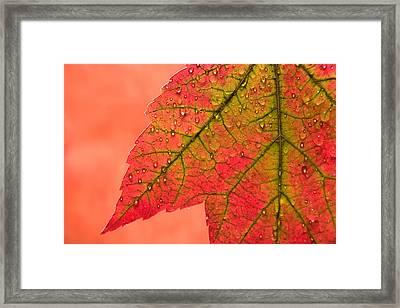 Red Autumn Framed Print by Carol Leigh