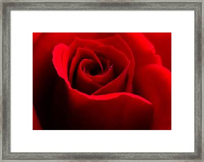 Red Beauty Framed Print by Rebecca Frank