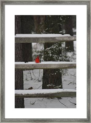 Red Bird Framed Print by Stacy C Bottoms