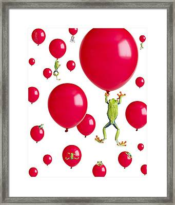 Red-eyed Treefrogs Floating On Red Framed Print by Corey Hochachka