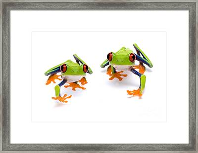 Red-eyed Treefrogs Walking Framed Print by Mark Bowler and Photo Researchers
