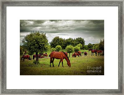 Eat Free Framed Print featuring the photograph Red Horses by Carlos Caetano