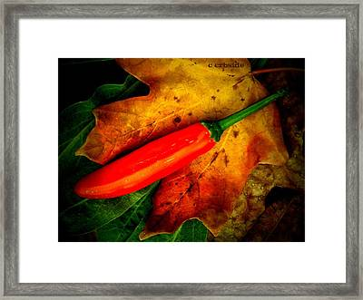 Red Hot Chili Pepper Framed Print by Chris Berry