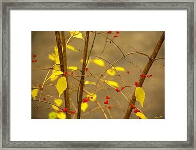 Red Hots Framed Print by Ed Smith