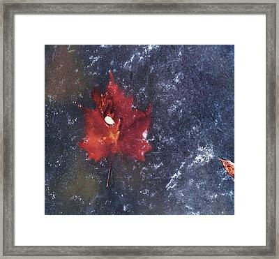 Red Leaf In Ice Framed Print by Todd Sherlock
