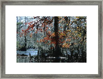 Red Maple And Bald Cypress Trees Framed Print by Raymond Gehman