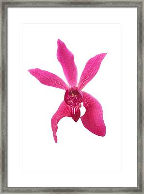 Red Orchid Head Framed Print by Atiketta Sangasaeng