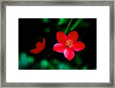 Red Petaled Dream Framed Print by Jennifer Bright