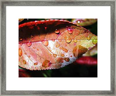 Red Rain Framed Print by Todd Sherlock