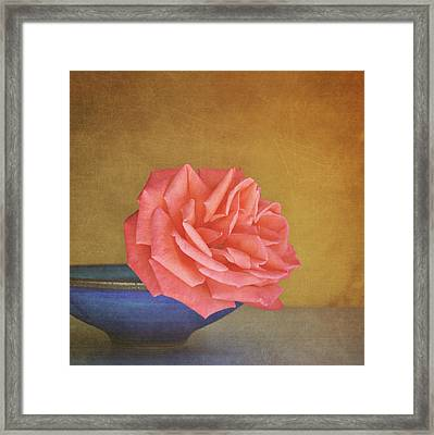 Red Rose Framed Print by Photo - Lyn Randle