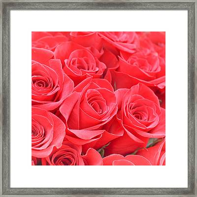 Red Roses Framed Print by Tom Gowanlock